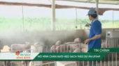 Ăn Sạch Sống Khỏe Tập 04 : Chăn nuôi heo sạch