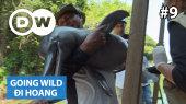 Đi Hoang Tập 09 :  Brazil - River Dolphins