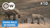 Đi Hoang Tập 10 : Central African Republic - Rangers at the Dzanga-Sangha National Park