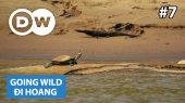 Đi Hoang Tập 07 : Peru - River Turtles