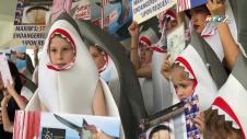 Độc Đáo Biểu Tình Kiểu Cá Mập