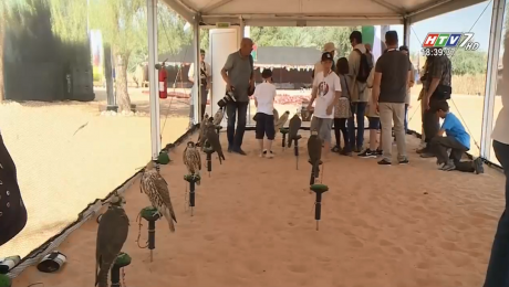 Lễ Hội Chim Ưng Quốc Tế Tại UAE