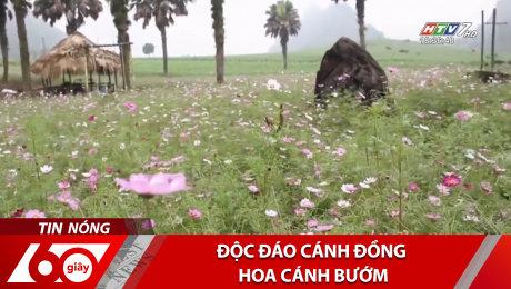 Xem Clip Độc Đáo Cánh Đồng Hoa Cánh Bướm HD Online.