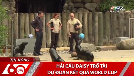 Xem Clip Hải Cẩu Daisy Trổ Tài Dự Đoán Kết Quả World Cup HD Online.