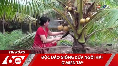 Độc Đáo Giống Dừa Ngồi Hái Ở Miền Tây