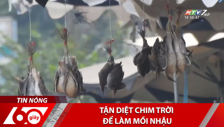 Xem Clip Tận Diệt Chim Trời Để Làm Mồi Nhậu HD Online.
