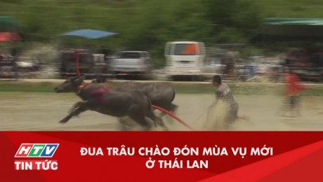 Đua Trâu Chào Đón Mùa Vụ Mới Tại Thái Lan