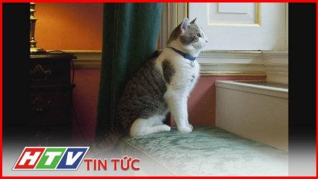 Xem Clip Mèo Larry - Nhân Vật Quyền Lực Nhất Tòa Nhà Số 10 Phố Downing HD Online.