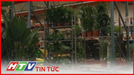 Xem Clip Khách Sạn Dành Cho Cây Cảnh Mở Cửa Tại Anh HD Online.