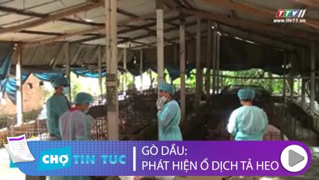 Xem Clip Gò Dầu: Phát Hiện Ổ Dịch Tả Heo Châu Phi HD Online.