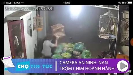Xem Clip Tổng Hợp Camera An Ninh: Nạn Trộm Chim Hoành Hoành HD Online.
