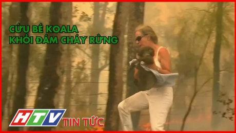 Bé Koala Được Cứu Thoát Khỏi Đám Cháy Rừng Đã Qua Cơn Nguy Kịch