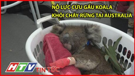 Nỗ Lực Cứu Gấu Koala Khỏi Cháy Rừng Tại Australia