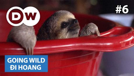 Xem Show TRUYỀN HÌNH THỰC TẾ Đi Hoang Tập 06 : Suriname - Sloths HD Online.