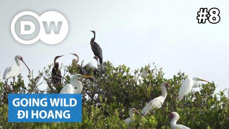Xem Show TRUYỀN HÌNH THỰC TẾ Đi Hoang Tập 08 : Mauretania - Diawling National Park HD Online.