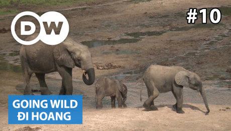 Xem Show TRUYỀN HÌNH THỰC TẾ Đi Hoang Tập 10 : Central African Republic - Rangers at the Dzanga-Sangha National Park HD Online.