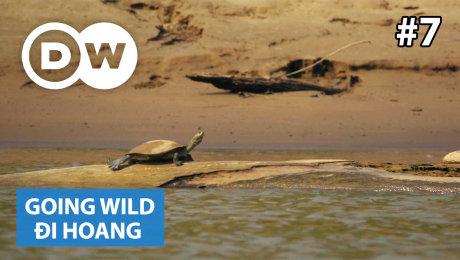 Xem Show TRUYỀN HÌNH THỰC TẾ Đi Hoang Tập 07 : Peru - River Turtles HD Online.