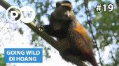 Đi Hoang Tập 19 : Rwanda - Golden Monkeys