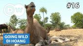 Đi Hoang Tập 16 : India - Camels