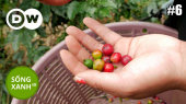 Sống Xanh Tập 06 : Costa Rica - How Coffee is Helping the Climate