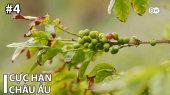 Cực Hạn Châu Âu Tập 04 : Coffee from Gran Canaria