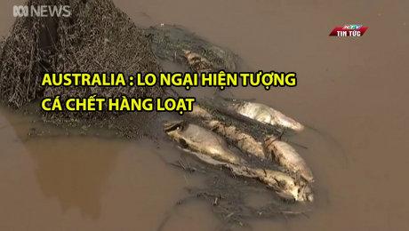 Australia : Lo Ngại Hiện Tượng Cá Chết Hàng Loạt