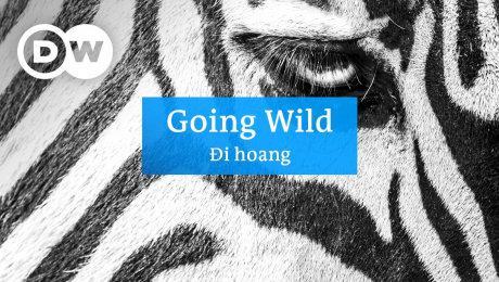 Đi Hoang