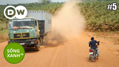 Xem Show TRUYỀN HÌNH THỰC TẾ Sống Xanh Tập 05 : Fair Palm Oil From Sierra Leone HD Online.