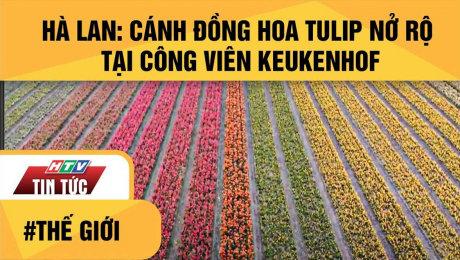 Hà Lan: Cánh Đồng Hoa Tulip Nở Rộ Tại Công Viên Keukenhof